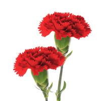 花の名前から選ぶ
